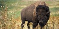 image: Congress, States Propose Protection Cuts for Endangered Species