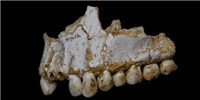 image: Secrets from Neanderthal Tooth Plaque