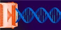 image: UC Berkeley Receives CRISPR Patent in Europe