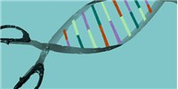 image: CRISPR Screen Detects Functional Gene Regulation