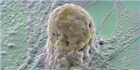 image: First Clinic-Ready Stem Cell Repository