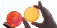 image: Online Platform Aims to Facilitate Replication Studies
