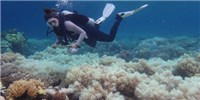 image: Report Confirms Widespread Great Barrier Reef Bleaching