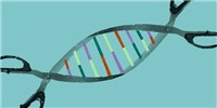 image: CRISPR-Based Nucleic Acid Test Debuts