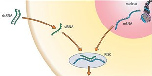 RNAi's Future in Drug-Target Screening