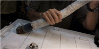 image: Image of the Day: Giant Shipworm