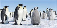 image: Image of the Day: World Penguin Day