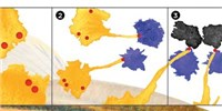 image: Macrophages Physically Relay Signals Between Cell Types