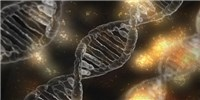 image: New Gene Therapy Shrinks Aggressive Tumors in Mice