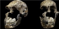 image: <em>Homo naledi</em> Likely Roamed Earth with <em>H. sapiens</em>