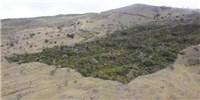 image: Global Forest Estimate Rises 9 Percent
