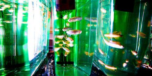 Study: Fishing Induces Gene Expression Changes