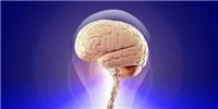 image: Smarty Genes