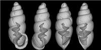 image: Image of the Day: Snails Uncensored