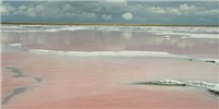 image: Researchers Discover Salt-Loving Methanogens