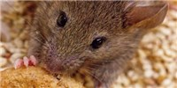 image: Binge-Eating Neurons Identified