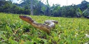 image: Snake Secrets