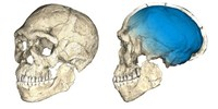 image: Scientists Uncover Oldest <em>Homo sapiens</em> Fossils to Date