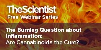image: The Burning Question About Inflammation: Are Cannabinoids the Cure?