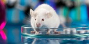 Analysis of Mouse Genes Reveals Novel Disease Models