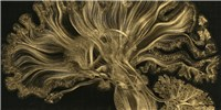 image: Image of the Day: Gold Matter