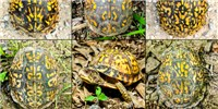 image: Image of the Day: Boxes of Turtles