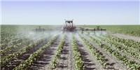 image: E.U. to Identify Endocrine Disrupters in Pesticides