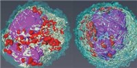 image: Researchers Uncover Previously Unknown Immune Cell Subtypes