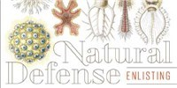 image: Book Excerpt from <em>Natural Defense</em>