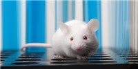 image: CRISPR Restores Muscle Function in Mice