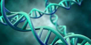Most of Human Genome Nonfunctional: Study