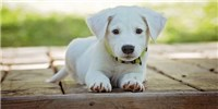 image: Dogs Have a Single Genetic Origin: Study