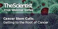 image: Cancer Stem Cells: Getting to the Root of Cancer