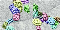 image: Study: DNA Folding Patterns Revealed
