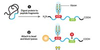 image: Quantitating Glycans for Biomarker Discovery