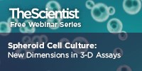 image: Spheroid Cell Culture: New Dimensions in 3-D Assays