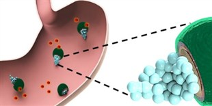 Tiny Motors Deliver Ulcer Medication in Mouse Stomachs