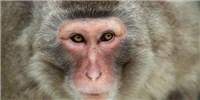image: Primate Brains Made to See Old Objects as New Again