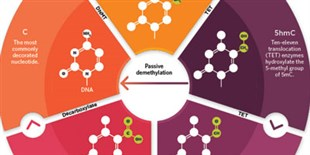 Infographic: The Various Forms of Methylated DNA