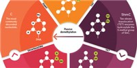 image: Infographic: The Various Forms of Methylated DNA