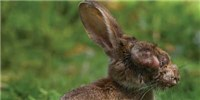 Do Pathogens Gain Virulence as Hosts Become More Resistant?
