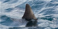 image: Opinion: Banning Shark Fin Sales in the U.S. Will Backfire