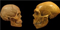 image: Effects of Neanderthal DNA on Modern Humans