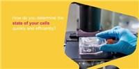 image: MilliporeSigma: Cell Analysis Tips