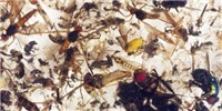 Germany Sees Drastic Decrease in Insects