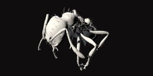 Check Out This 3-D Interactive Fire Ant Model