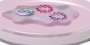 Infographic: Combo Method of Stem Cell Generation
