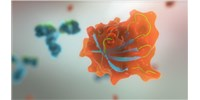 image: Avacta: Anti di-Ubiquitin K6 and K33 Affimers