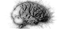 image: Thousands of Mutations Accumulate in the Human Brain Over a Lifetime