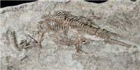 image: Image of the Day: Sea Dinosaur